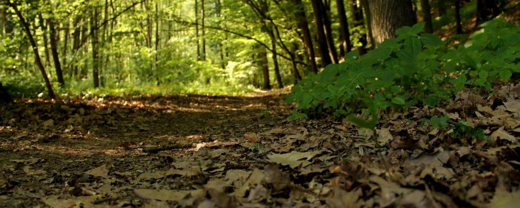 alberi piantarne miliardi per salvare il pianeta