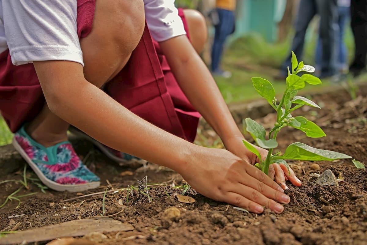 Alberi, piantarne miliardi per salvare il clima