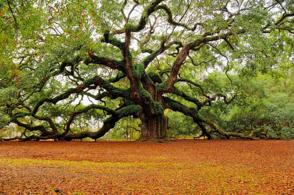 ginkgo un albero che sfiora l'eternità