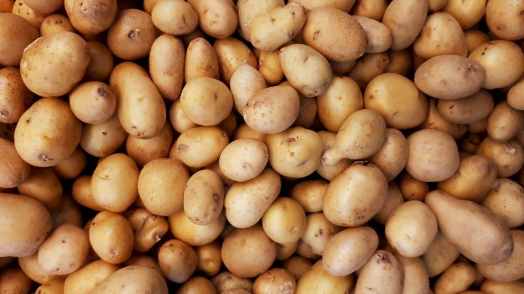 la micro patata dei pellerossa verrà coltivata ancora