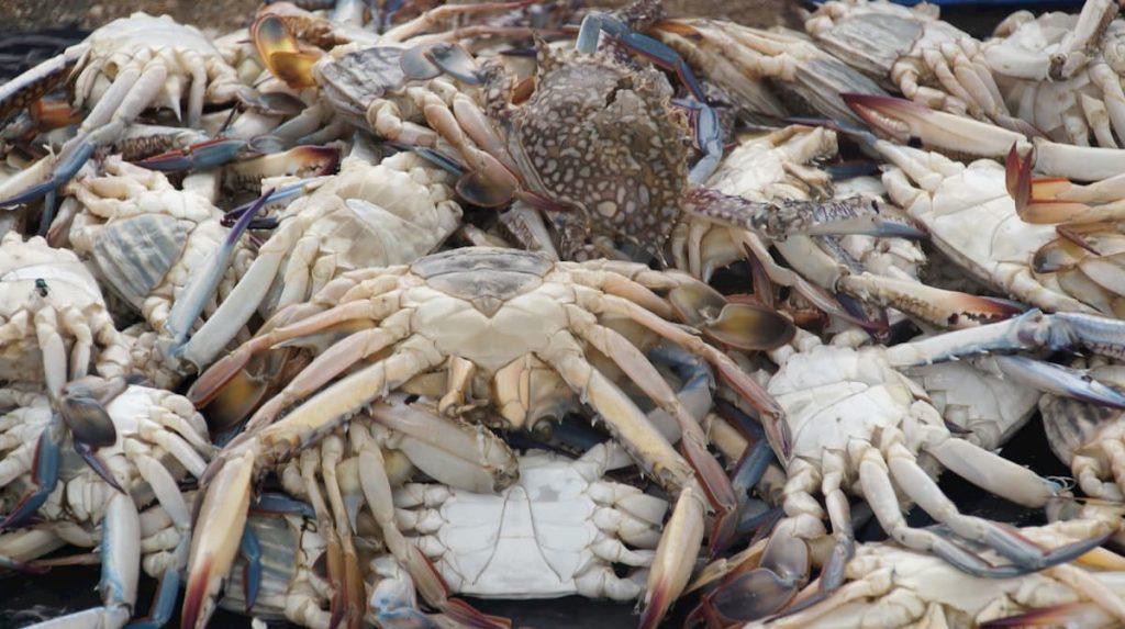 oceano pacifico troppo acido scioglie i gusci dei granchi