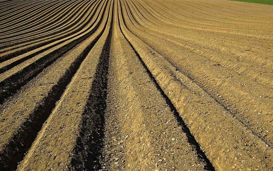 Lavoratori agricoli, la follia d'importarli dall'estero.