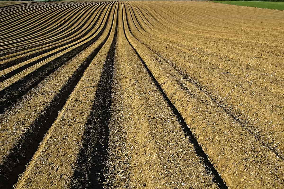 Lavoratori agricoli la follia d'importarli dall'estero.
