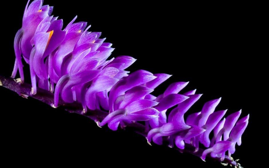 Prendiamo esempio dai fiori per ripartire