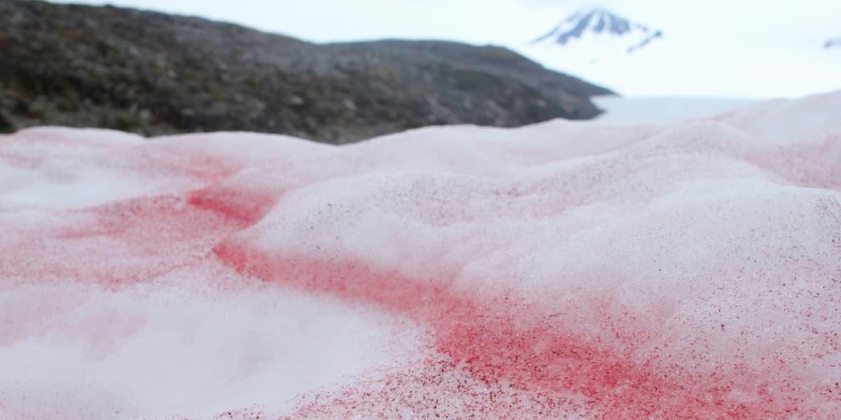 Vedere i ghiacciai rosa non è molto positivo