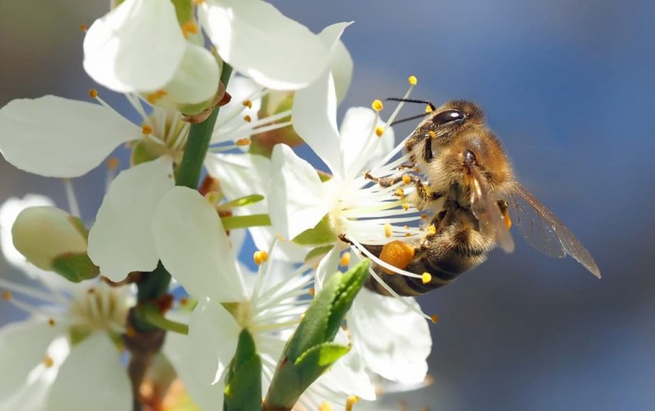 20 maggio Giornata mondiale delle api
