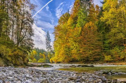 azioni promozionali per sostenere i boschi