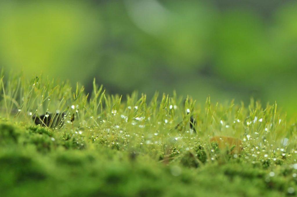 l'odore più antico della Terra è quello della pioggia
