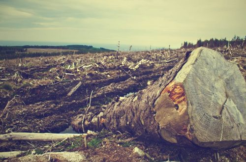 anche noi contribuiamo alla deforestazione mondiale