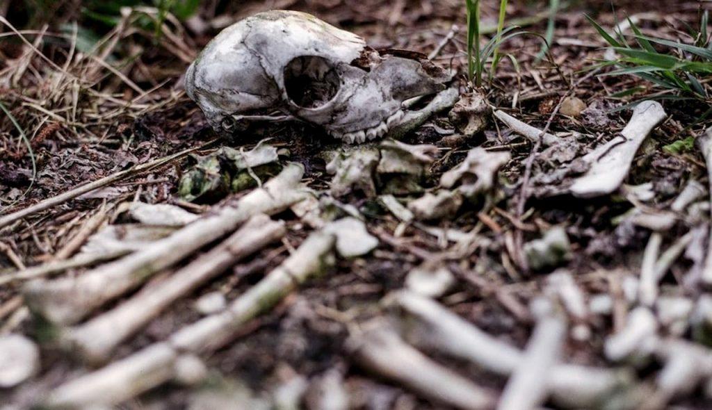 ossa scozzesi o vichinghe in pericolo