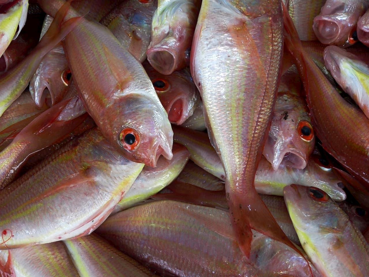 Una diagnosi con la puzza del pesce marcio