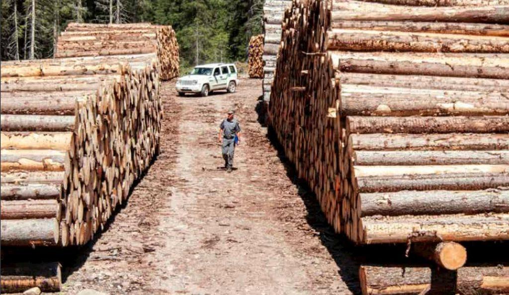 foreste dopo la tempesta Vaia una nuova consapevolezza