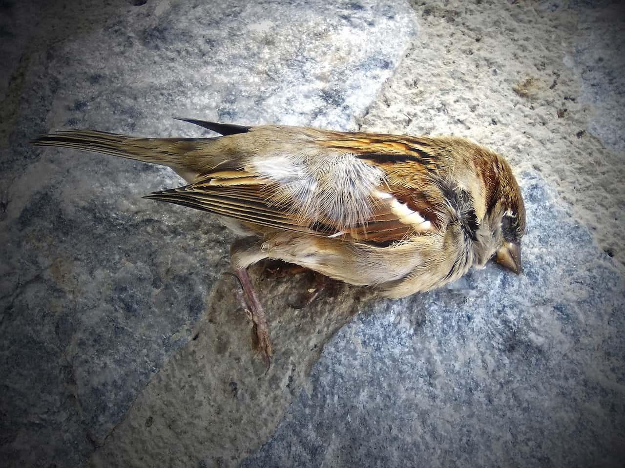 Mistero su migliaia di uccelli migratori morti negli USA.