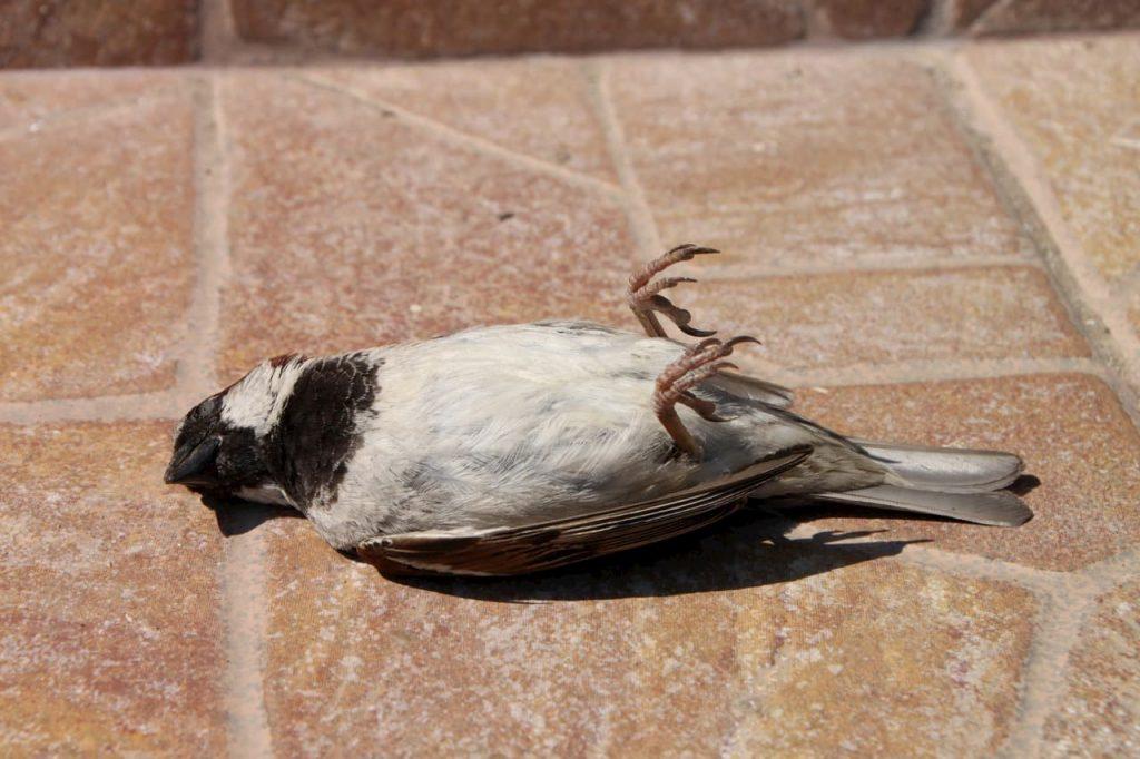 Mistero su migliaia di uccelli migratori morti negli USA
