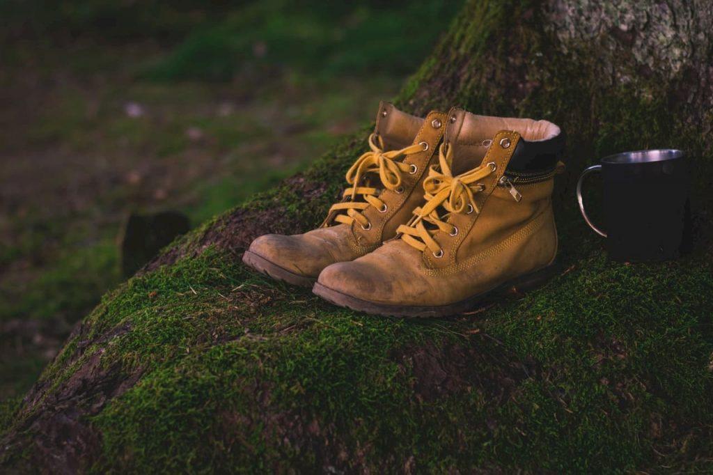 Una gang di volpi in città che ruba le scarpe