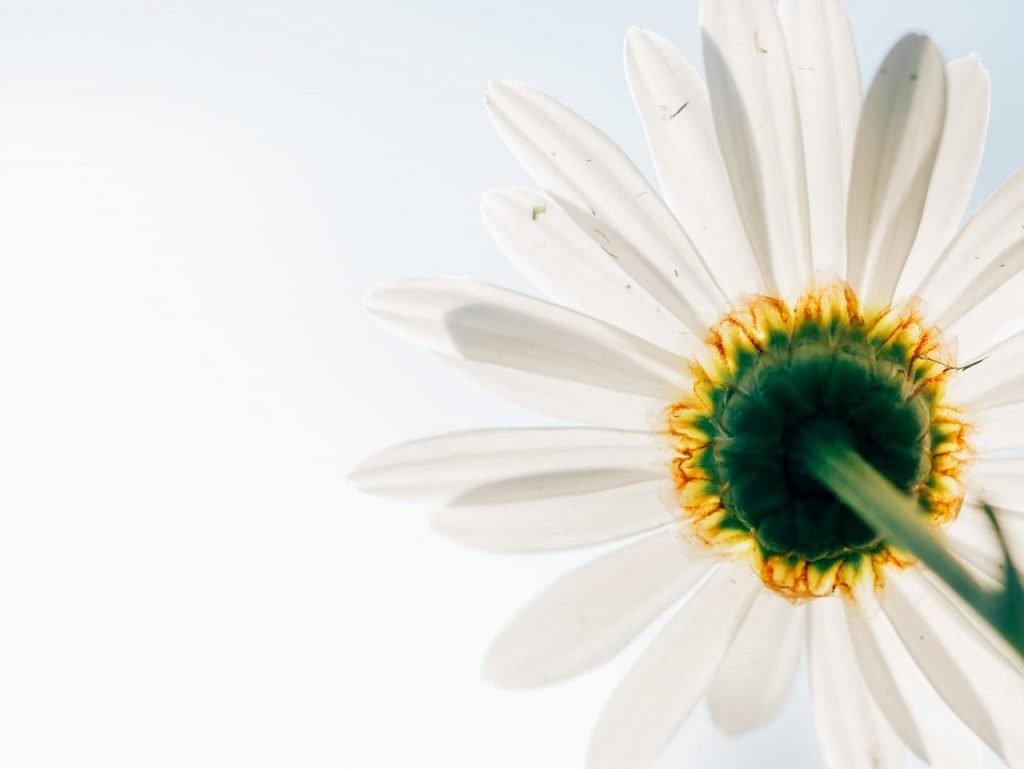 fiori scuriscono i colori per i cambiamenti climatici