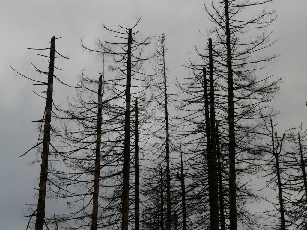 Le foreste della cintura boreale stanno scomparendo