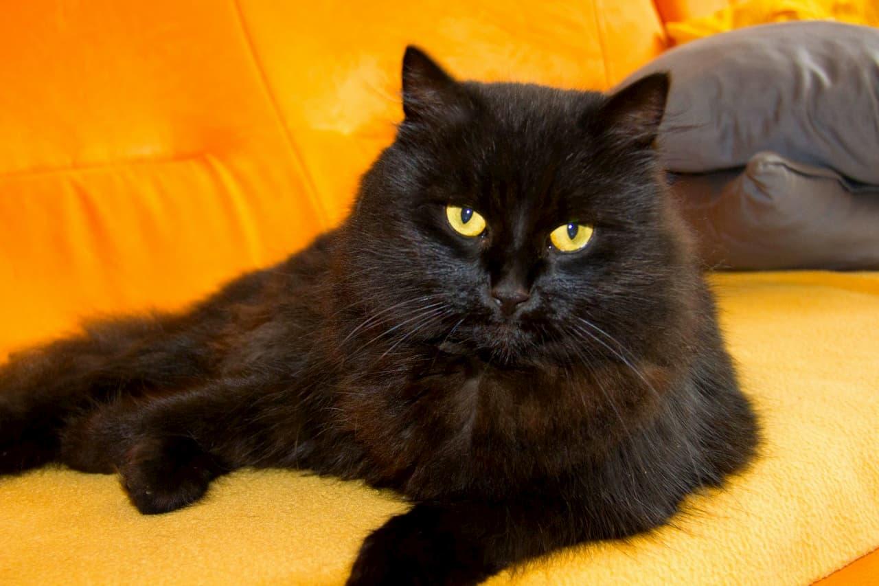 Il giorno del gatto nero