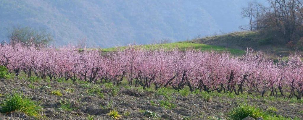 Agricoltura rigenerativa alla base della sostenibilità