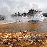 Polli lessati nelle piscine termali di Yellowstone