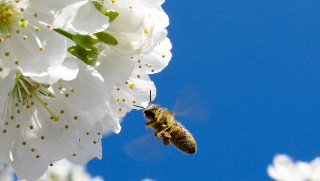 Slow Food Ricola e i Mieli di Montagna difendono le api