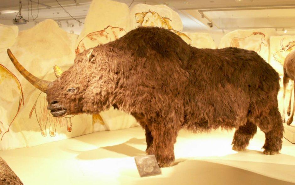 Il cambiamento climatico e il rinoceronte lanoso