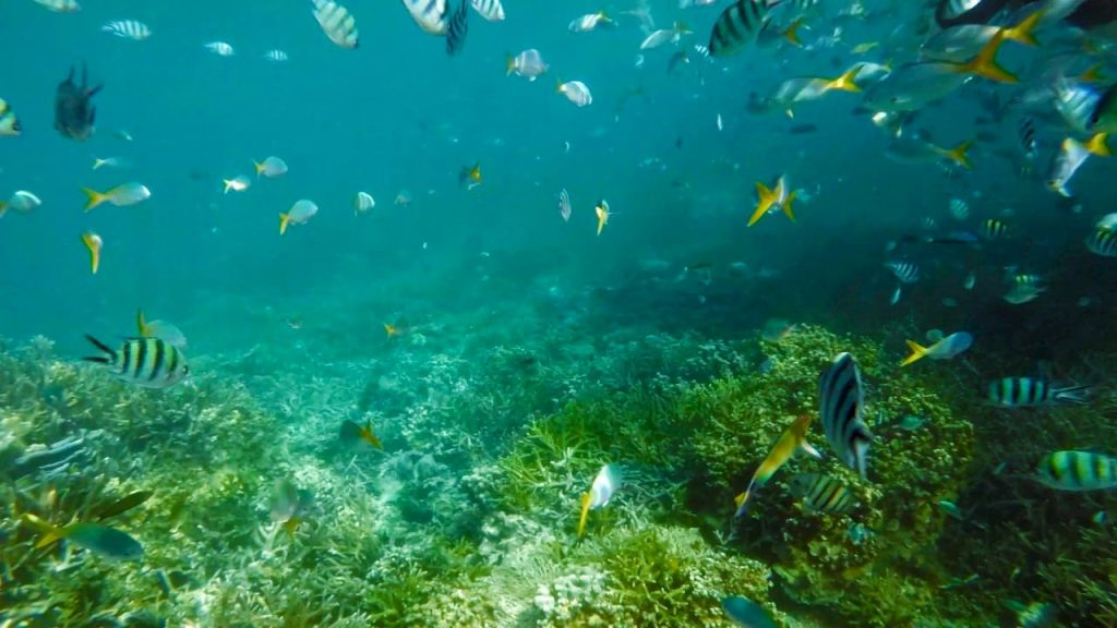 le alghe cantano e divorano anidride carbonica