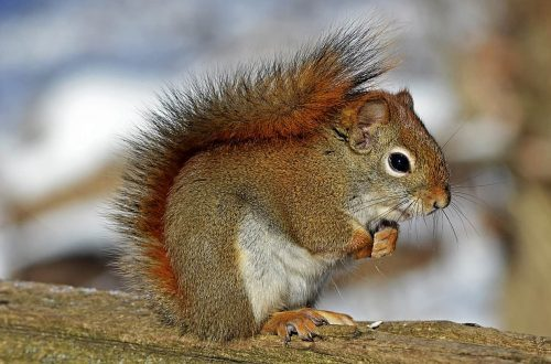 Lo show di uno scoiattolo ubriaco