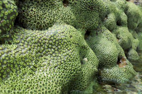Una barriera corallina che nessuno conosceva
