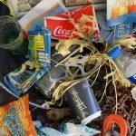 Plastica inquinante trovata nelle placente umane