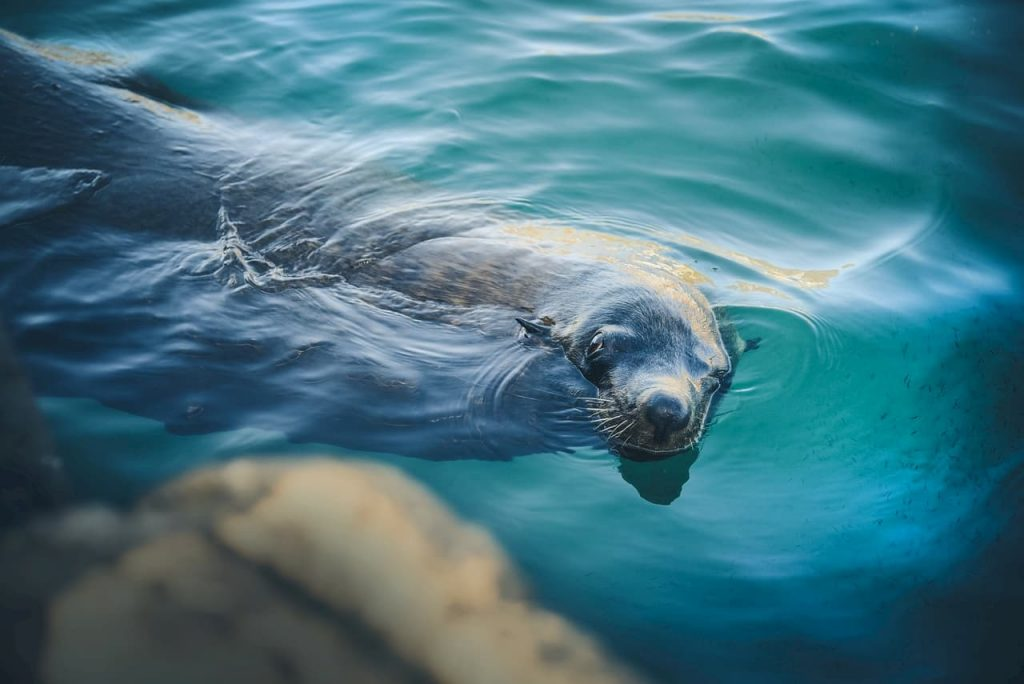 Sono troppi i mammiferi marini che scompaiono