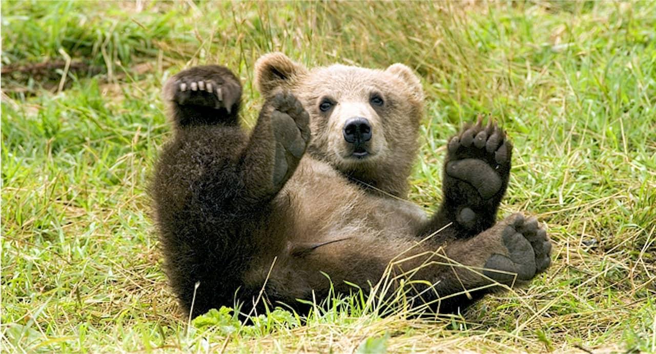 Un selfie condanna a morte un orsacchiotto