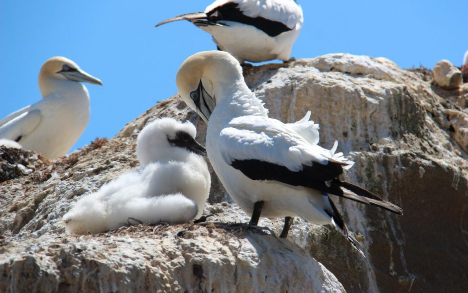 Deserti resi abitabili e fertili grazie agli uccelli.