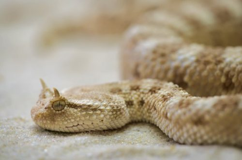 i segreti della pelle di serpente