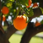 La moda fatta con le arance