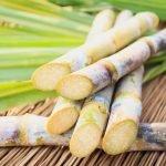 Agricoltura rivoluzionata dai batteri dello zucchero