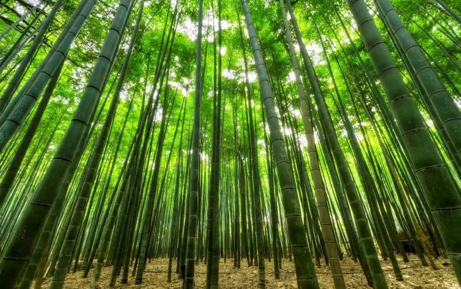 C'è un bosco nuovo e lo dobbiamo tutto ad un uomo