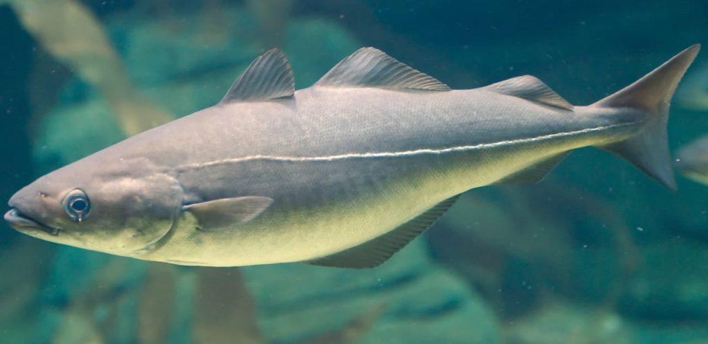 Bastoncini di pesce economici e fortunati