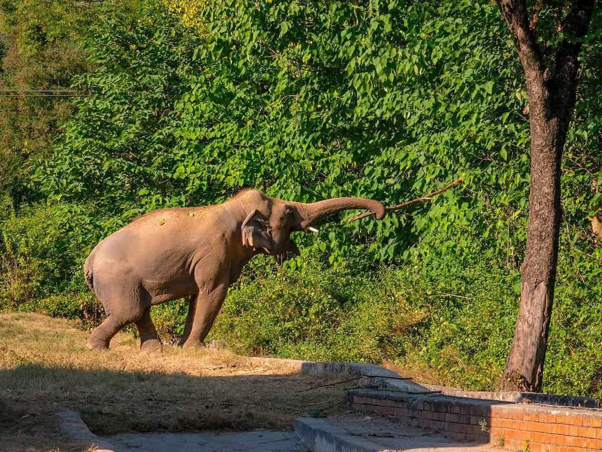 Cher e l'elefante più solitario del mondo