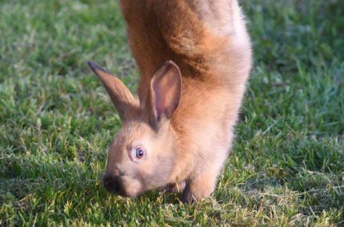 Conigli equilibristi ed esibizionisti