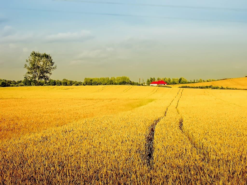 L'etica della filiera agricola