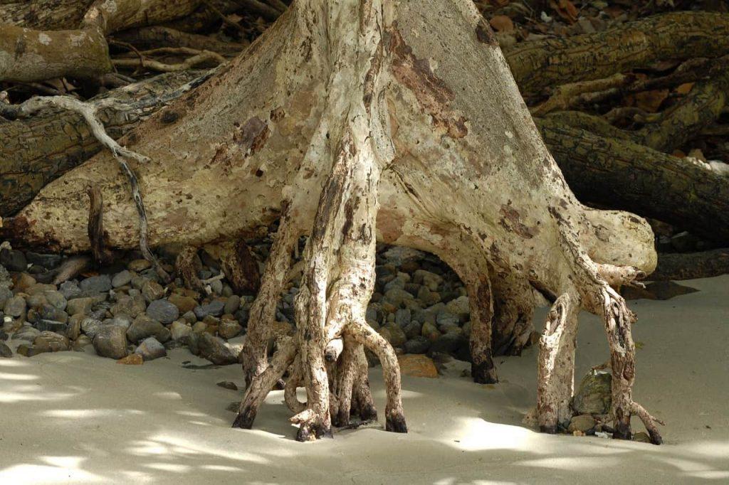 Anche gli alberi scorreggiano