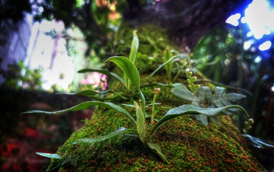 La speranza di ricreare i paradisi tropicali