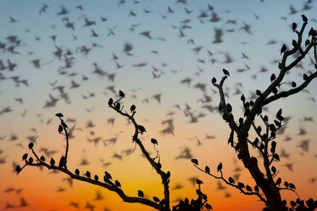 Scoperta la causa della morte di migliaia di migratori