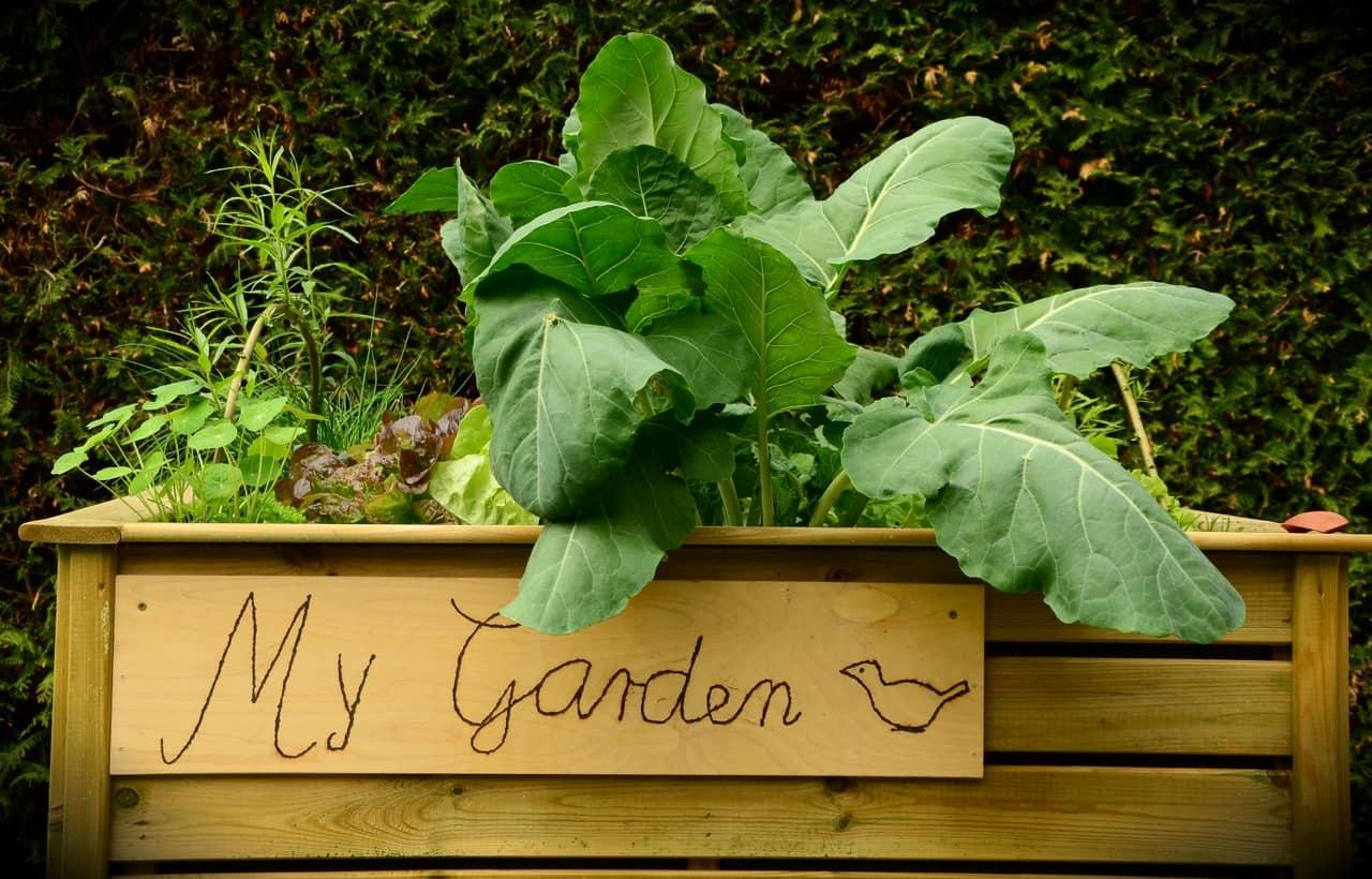Tutti nell'orto a coltivare