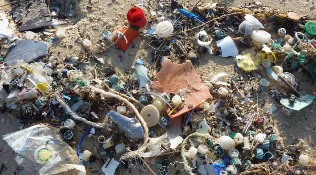 Uccelli marini e plastica ingerita
