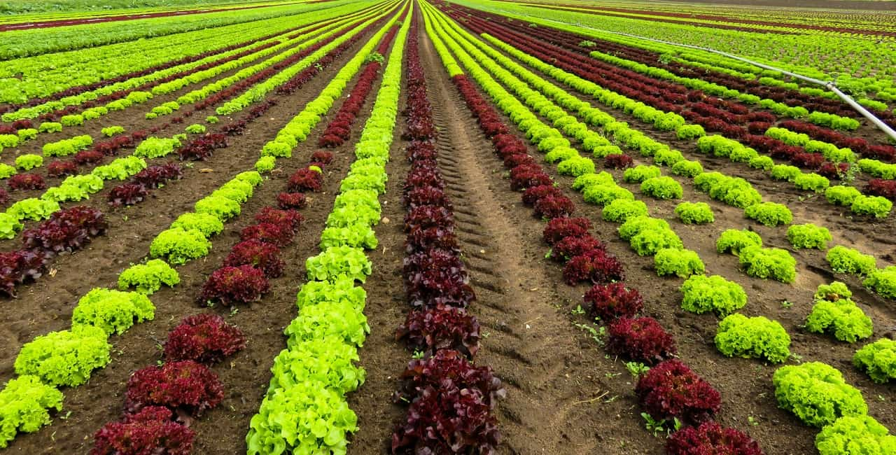 Un futuro biologico per l'agricoltura europea