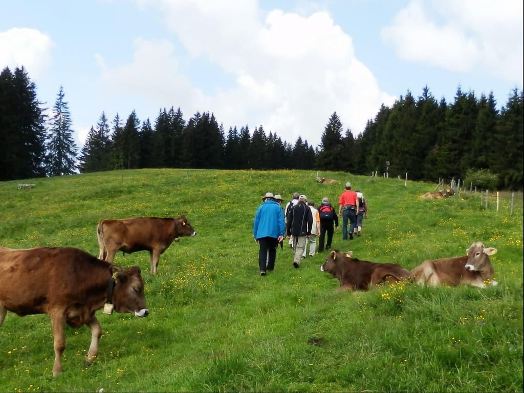 un ospizio per vecchie vacche