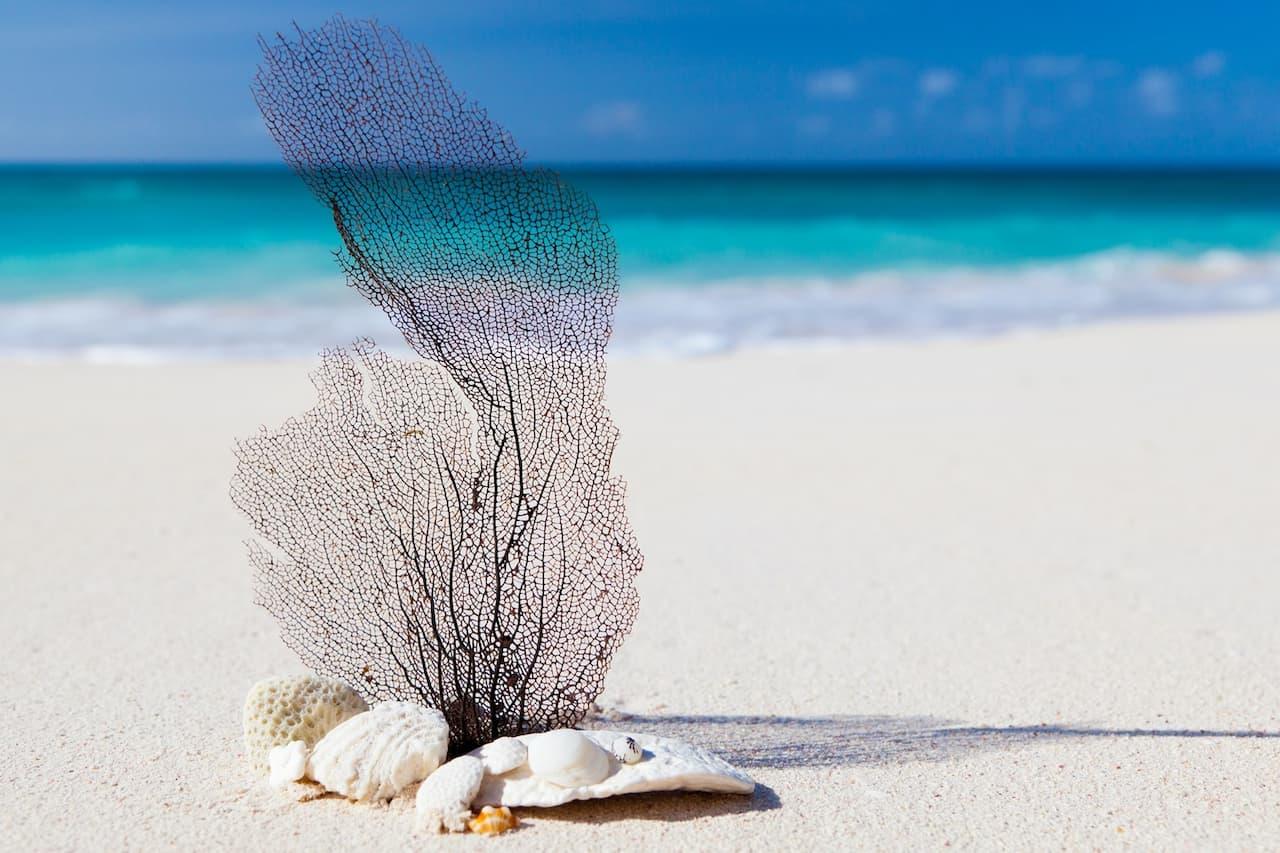 Una spiaggia bellissima e velenosa