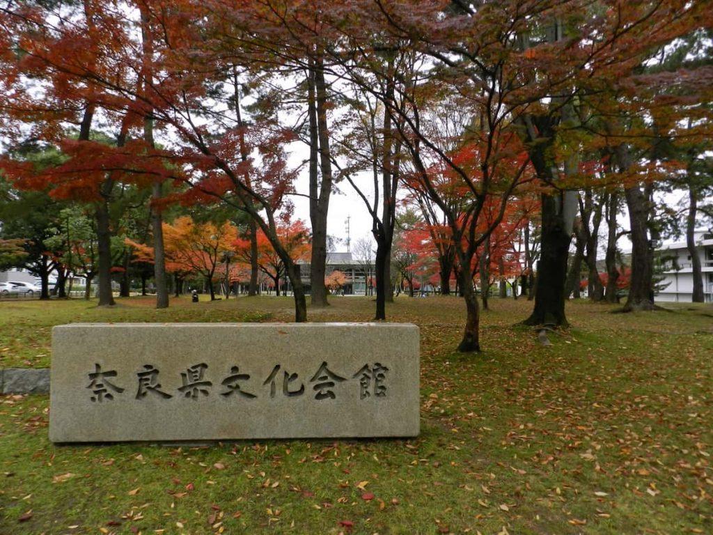"""In Giappone fanno le """"sepolture ad albero"""""""